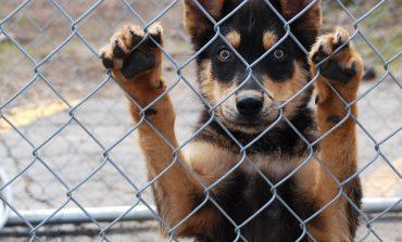 Σύγχρονο Δημοτικό Καταφύγιο Ζώων η πρότασή μας για τα αδέσποτα. Μπροστά με Διαφάνεια.