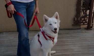 Γιατί είναι καλό να φοράς λουράκι στο σκύλο σου σε δημόσιους χώρους;