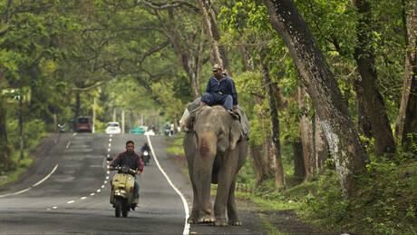 Άφησαν νηστικό ελέφαντα, τους ποδοπάτησε και... κέρδισε την ελευθερία του (vid)