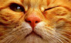 Η κυβέρνηση της Αυστραλίας αποφάσισε τον θάνατο 2 εκατομμυρίων αδέσποτων γατών!