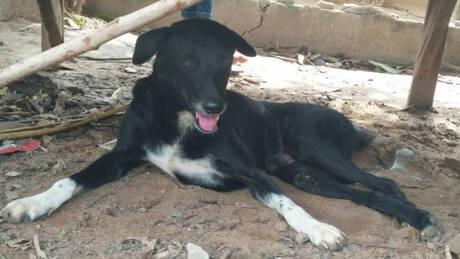 Ένας σκύλος – ήρωας: Έσωσε νεογέννητο που έθαψε η 15χρονη μητέρα σε χωράφι (pics)