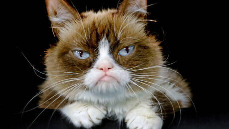 Grumpy Cat ή… γκρινιάρα γάτα: Ένα διαδικτυακό φαινόμενο άφησε τα εγκόσμια (pics&vids)