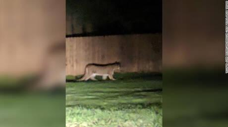 Κούγκαρ επιτέθηκε σε αγόρι σε πάρκο της Ουάσινγκτον