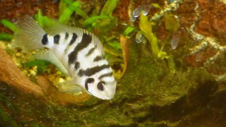 Ο ερωτικός χωρισμός πονάει ακόμα και τα… ψάρια