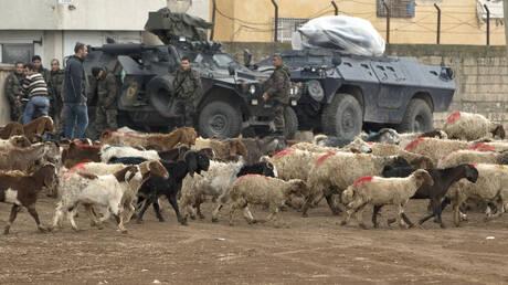 Συρία: Κούρδοι μαχητές απελευθέρωσαν χιλιάδες πρόβατα από «πορνείο ζώων» του ISIS