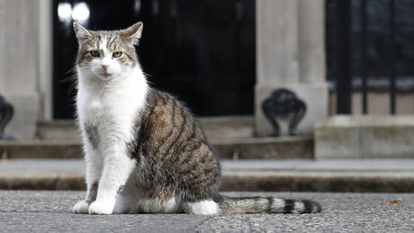 Βρετανία: Ο Λάρι, ο πρωθυπουργικός γάτος, αποκτά τετράποδη συντροφιά με εντολή Τζόνσον (pics&vids)