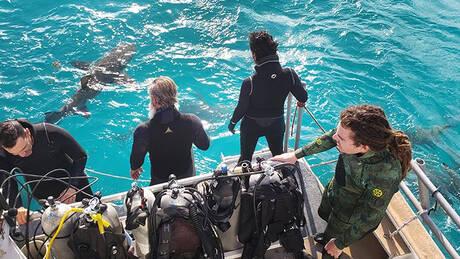 Τζερεμάια Σάλιβαν: Ο άνθρωπος που θέλει να τον δαγκώνουν… καρχαρίες (pics&vid)