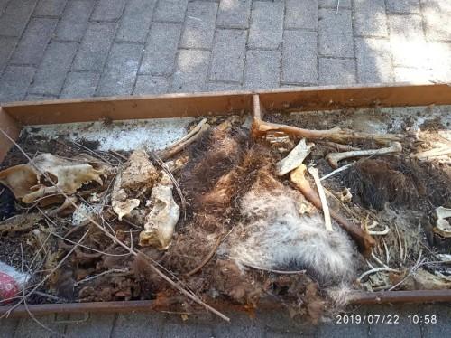 Φρίκη στο Μοσχάτο: Αδέσποτα ζωάκια βρέθηκαν νεκρά σε σπίτι