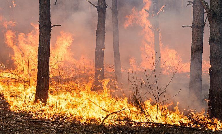 Εκκενώθηκαν μέσα στη νύχτα κατασκηνώσεις στον Παρνασσό λόγω φωτιάς