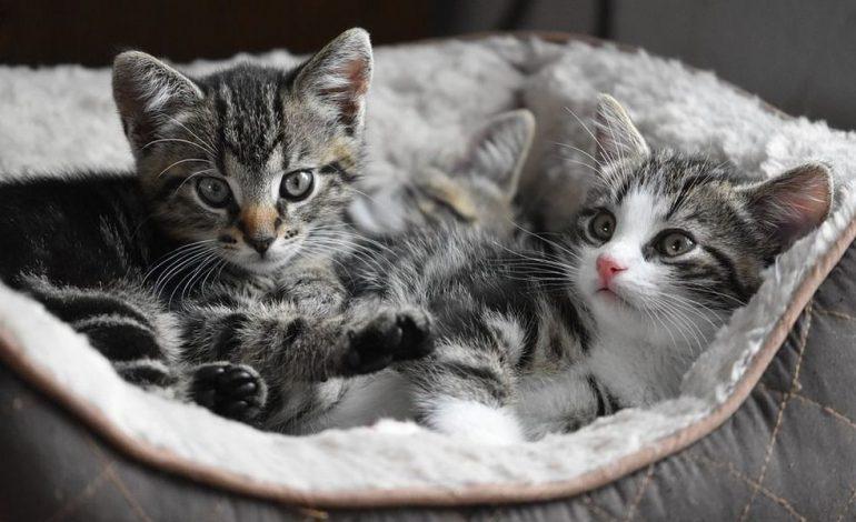 H Νέα Υόρκη απαγορεύει την ονυχεκτομή στις γάτες