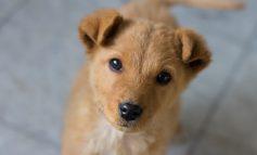 Puppy day σήμερα 6/07 στην Κηφισιά