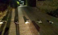 Αδιανόητη πράξη στα Χανιά: Βασάνισαν γάτες, τους έβγαλαν τα μάτια και τις σκότωσαν