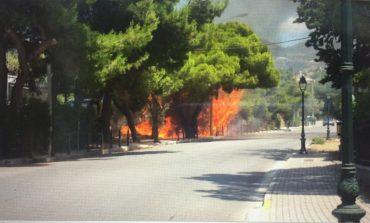 Γιατί ψεύδεται ο Δήμος Κηφισιάς για τη φωτιά στον Κοκκιναρά ;