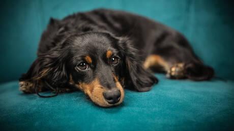 Αυστραλία: Πρόστιμο 2.400 ευρώ σε όσους δεν βγάζουν βόλτα τους σκύλους τους!