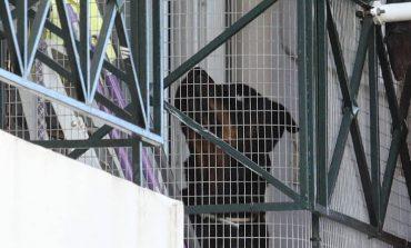 Τα δραματικά λεπτά της επίθεσης του ροτβάιλερ στο βρέφος στα Γλυκά Νερά