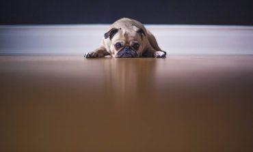 Φρίκη: Μαχαίρωσε το σκυλάκι των παππούδων του και προσπάθησε να το κάψει ζωντανό