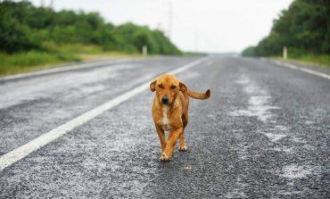 Μαζική δηλητηρίαση σκύλων από φόλες στη Φλώρινα