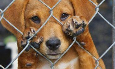 Ελληνική Αστυνομία : κακοποίηση ζώων. Τι πρέπει να κάνω ;