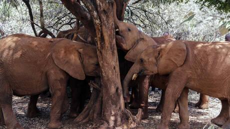Ζιμπάμπουε: Θύματα της ξηρασίας 55 ελέφαντες – Πέθαναν από πείνα και δίψα