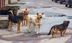 Διόνυσος: Αγέλη σκυλιών επιτέθηκε σε ανθρώπους
