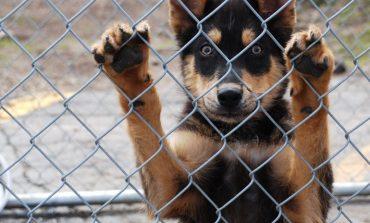 Ομόφωνα το Δημοτικό Συμβούλιο Κηφισιάς αποφάσισε τη δημιουργία καταφυγίου αδέσποτων ζώων