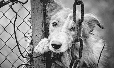 Πολλές οι καταγγελίες, λίγες οι συλλήψεις για την κακοποίηση ζώων στην Ελλάδα