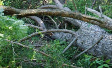 Τραγωδία στην Κρήτη: Έπεσε το δέντρο και τον σκότωσε