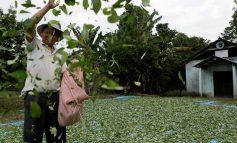 Οι αρχές του Περού κατέστρεψαν μεγάλες εκτάσεις με καλλιέργειες κόκας