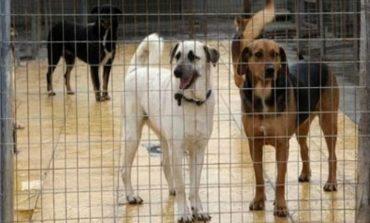 Χρηματοδότηση 600.000 ευρώ για τη βελτίωση καταφυγίων αδέσποτων ζώων