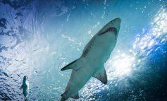 Γαλλία: Λείψανα άνδρα βρέθηκαν στο στομάχι καρχαρία