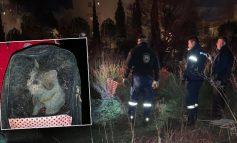 Μαρούσι: Η Πυροσβεστική διέσωσε γάτα που έπεσε σε φρεάτιο βάθους 14 μέτρων