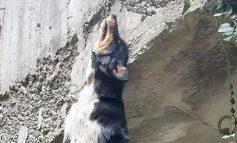 Κτηνωδία στη Νάξο: Κρέμασαν σκυλί από γέφυρα-Έκκληση να βρεθεί ο δράστης