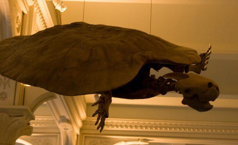 Stupendemys, η γιγάντια χελώνα  που έζησε πριν από εκατομμύρια χρόνια