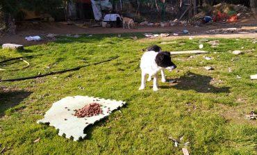 Διαμαρτυρίες φιλόζωων για αλυσοδεμένα σκυλιά στην Κηφισιά. Τι απαντά η προσωρινή πρόεδρος της Επιτροπής Ζωοφιλίας