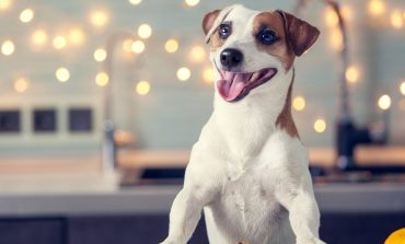 Αυτές είναι οι τροφές που δεν πρέπει να τρώει ο σκύλος σας