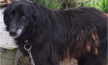 Στον Εισαγγελέα η υπόθεση των αλυσοδεμένων σκυλιών στην Κηφισιά