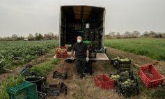 Ο κορωνοϊός «διώχνει» τους εργάτες από τα χωράφια απειλώντας την Ευρώπη με έλλειψη φρούτων & λαχανικών