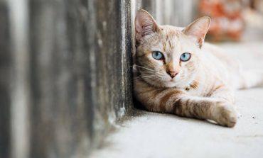 Ο πρώτος γάτος που νόσησε με κορονοϊό – Πώς νόσησε το ζώο