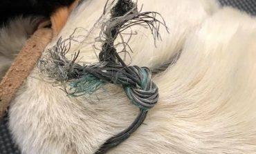 Καταγγελία για λαθροκυνηγούς από τους Φιλόζωους Εθελοντές της Εκάλης