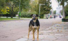 Χαμός στο διαδίκτυο με ανάρτηση για δάγκωμα συμπολίτη μας από σκύλο στις Αδάμες Κηφισιάς