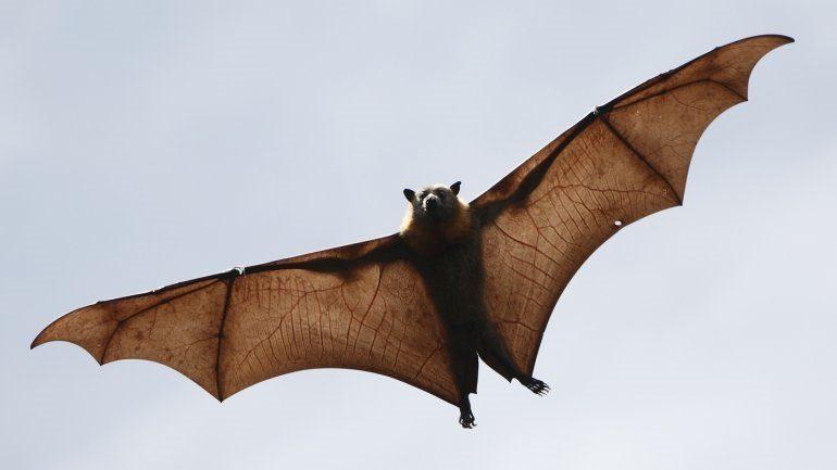 Ανακαλύφθηκαν έξι νέοι κορωνοϊοί σε νυχτερίδες – Υπάρχουν χιλιάδες άλλοι