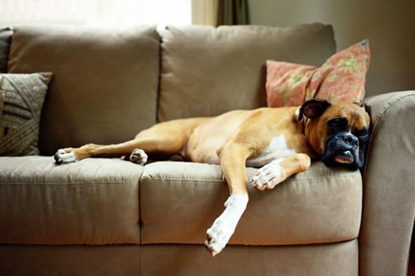 Δείτε το κόλπο για να μαζέψετε τις τρίχες του κατοικίδιού σας από τον καναπέ