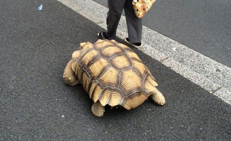 Κορωνοϊός: Πρόστιμο 400 ευρώ σε 60χρονη που έβγαλε βόλτα τη… χελώνα της