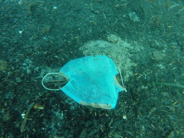 Τα απορρίμματα του κοροναϊού απειλούν τη θαλάσσια ζωή
