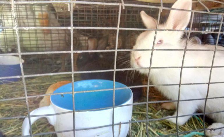 Συλλήψεις από Α.Τ. Χαιδαρίου για παράνομη εμπορία ζώων