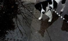 Δεκάδες έλεγχοι της αστυνομίας σε ιδιοκτήτες ζώων συντροφιάς