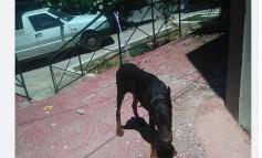 Μάχη στο facebook για τον αλυσοδεμένο σκύλο στο Δήμο Κηφισιάς