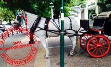 Fact check: Η είδηση με το άρρωστο άλογο στην Κηφισιά