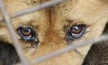 Κακοποίηση ζώων: Έρχονται αυστηρότερες κυρώσεις και ποινές