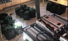 Εντοπίστηκαν τρία πλήρως οργανωμένα εργαστήρια υδροπονικής καλλιέργειας κάνναβης σε οικία στους Θρακομακεδόνες